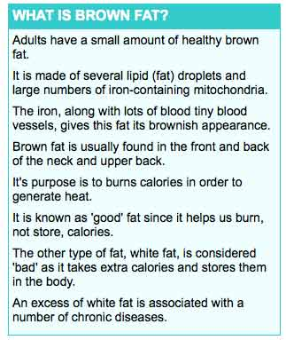 What is brown fat
